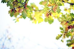 Autumn Leaves Background foto de archivo