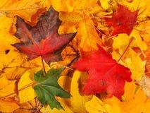 Autumn Leaves Background lizenzfreie stockfotos