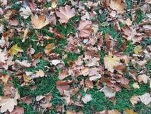 Autumn Leaves Background Stockbild