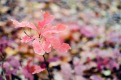 Autumn Leaves Background Imagenes de archivo