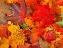 Autumn Leaves Background royalty-vrije stock fotografie
