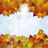 Autumn Leaves Background illustration stock