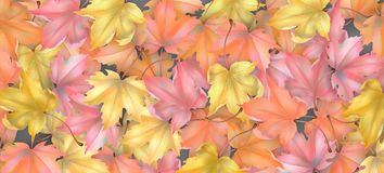 Autumn Leaves Background Vector Illustratie