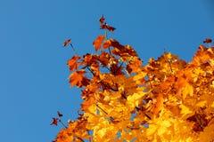 Autumn Leaves Background fotografia stock libera da diritti