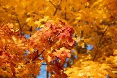 Autumn Leaves Background immagini stock libere da diritti
