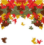 Autumn leaves, background Royalty Free Stock Image