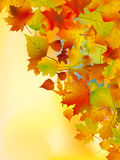 Autumn leaves background. Royalty Free Stock Photography
