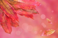 Autumn leaves background Stock Photo