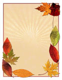 Autumn leaves background. A background design of autumn leaves Royalty Free Stock Images