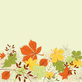 Autumn leaves background stock photography