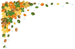 Autumn leaves, background Stock Images