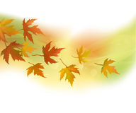 Autumn leaves, background. Autumn leaves, green and yellow  background Stock Images