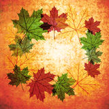 Autumn leaves background. Fall leaves transparency circle vintage composition background Vector Illustration