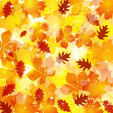 Autumn leaves background Stock Image