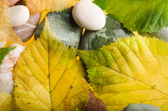 Autumn  leaves, background Royalty Free Stock Images