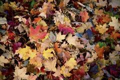 Autumn Leaves Background Fotografering för Bildbyråer