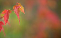 Autumn Leaves Background royaltyfri fotografi