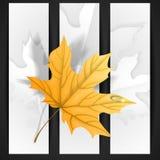 Autumn Leaves Background. Royaltyfri Bild