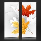 Autumn Leaves Background. Arkivfoto