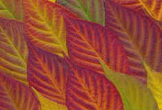 Autumn Leaves Background Fotos de Stock Royalty Free