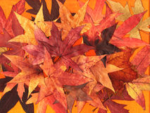 Autumn leaves background. Background of colorful pressed autumnal leaves Stock Photo