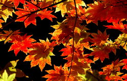 Autumn leaves background. Warm, Autumn leaves on a black background stock images