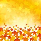 Autumn Leaves Background Fotografía de archivo libre de regalías