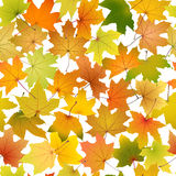 Autumn Leaves Background Lizenzfreie Stockbilder