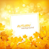Autumn Leaves Background Stock Foto's