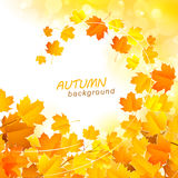 Autumn Leaves Background Immagini Stock Libere da Diritti