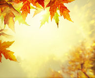 Autumn Leaves Background Imagens de Stock Royalty Free