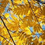 Autumn Leaves Background Fotos de archivo libres de regalías