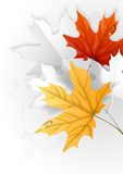 Autumn Leaves Background Royalty-vrije Stock Afbeelding