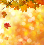 Autumn Leaves Background Lizenzfreies Stockfoto