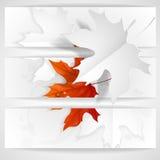 Autumn Leaves Background Photo libre de droits