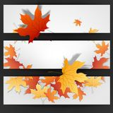 Autumn Leaves Background royalty-vrije illustratie