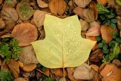 Autumn Leaves Background Imagem de Stock Royalty Free