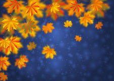 Autumn Leaves Background Stock Afbeelding