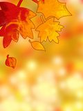 Autumn leaves background. Atmospheric sheet of paper of autumn day with fire leaf Royalty Free Stock Photography