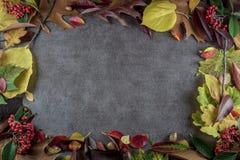 Autumn Leaves Background Imagens de Stock