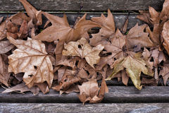 Autumn Leaves Background Stock Foto
