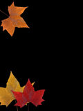 Autumn Leaves Background. An abstract background with autumn leaves on a black background Royalty Free Stock Photos