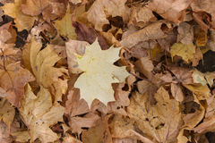 Autumn Leaves Background Foto de archivo libre de regalías