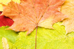Autumn Leaves Background Royalty Free Stock Photos