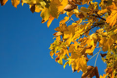 Autumn Leaves Background Stockfoto