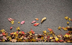 Autumn Leaves Background Imagens de Stock