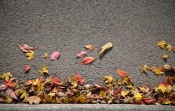 Autumn Leaves Background Stockbilder