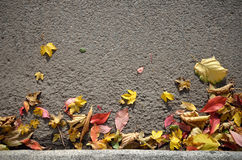 Autumn Leaves Background Foto de Stock Royalty Free