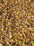 Autumn Leaves Background Imagen de archivo