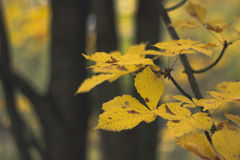 Autumn Leaves Background Photographie stock